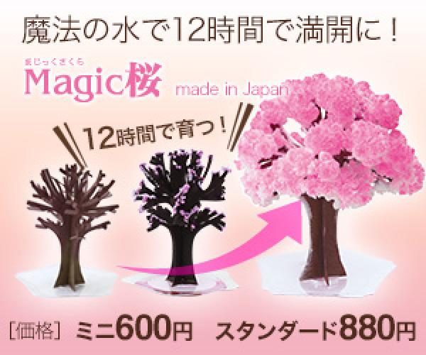 ミニ盆栽、受験・合格祈願、合格祝い、プレゼントに不思議な桜